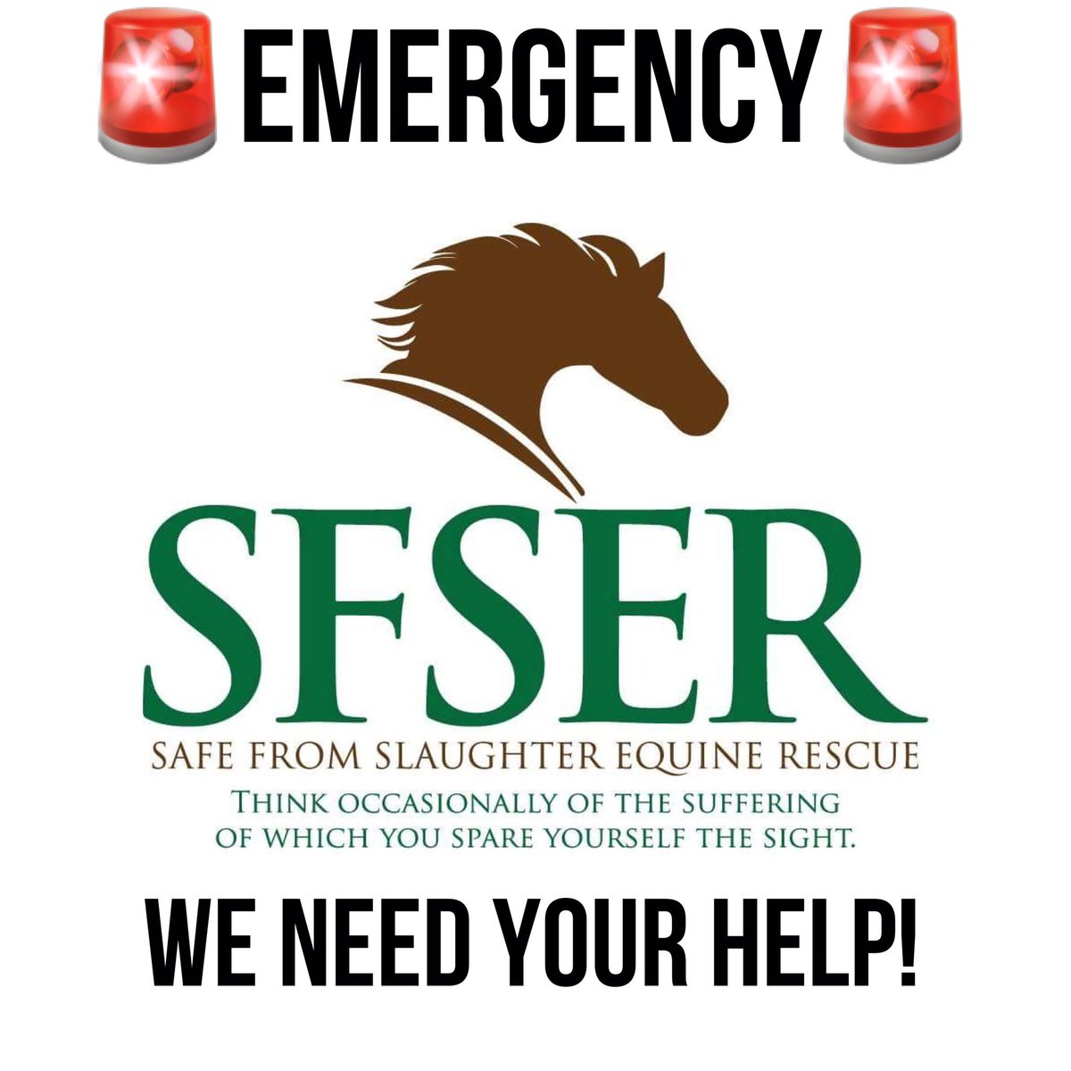 Safe From Slaughter Equine Rescue 501(c)3 on Twitter