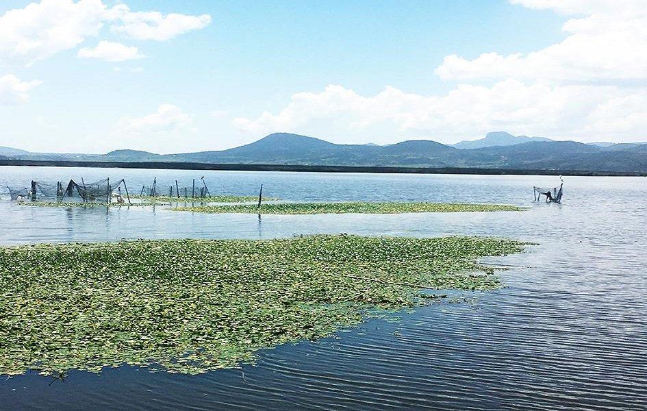 #MedioAmbiente | #IPN rescata último humedal del #ValledeMéxico🗣El objetivo de este proyecto es intervenir y preservar de manera integral lugares con potencial turístico y recreativohttps://www.vozdelasociedad.com/single-post/2019/07/22/IPN-rescata-%C3%BAltimo-humedal-del-Valle-de-M%C3%A9xico…