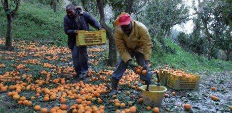 Falsi braccianti agricoli, due truffe all'Inps scoperte dalla Finanza di Ragusa - https://t.co/CsJ1zIqWVR #blogsicilianotizie