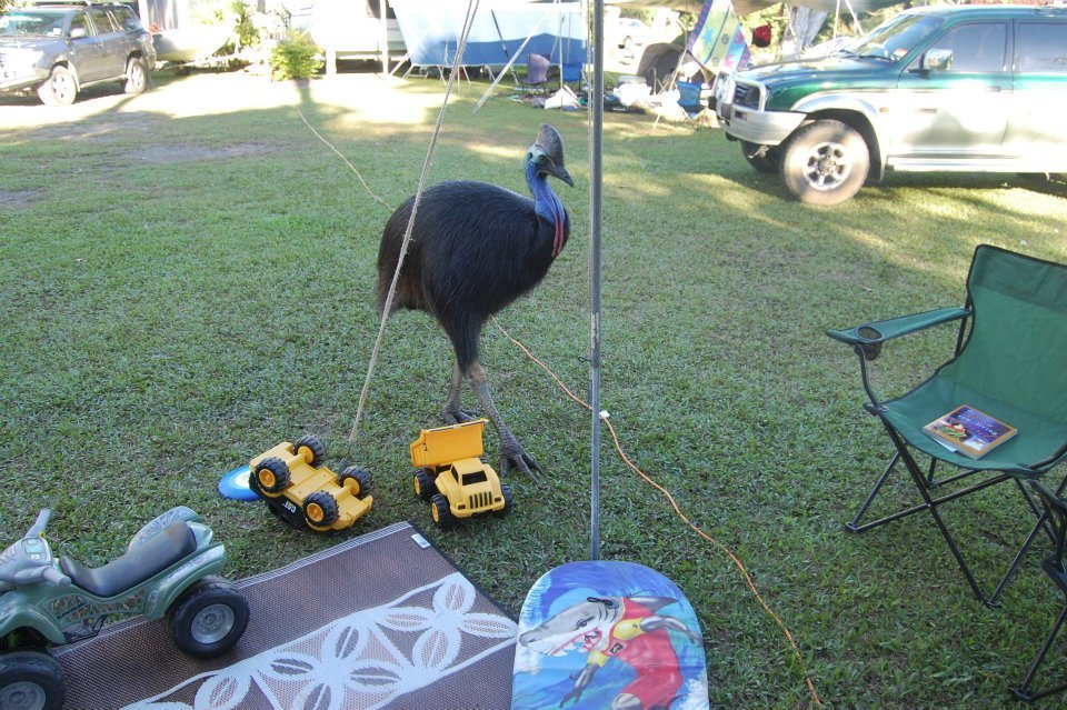 Yikes! A #cassowary visiting my daughter's camp site. https://t.co/8Jr1WIzdRS