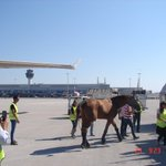 Image for the Tweet beginning: Πρωινή άφιξη #athensairport για το