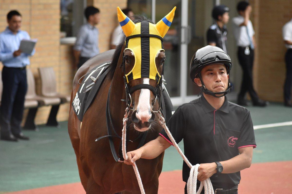 2019年7月21日 中京9R長久手特別 アルティマリガーレ(浜中俊騎手) 中団から馬群の中を進んで、直線で外に切り替えると残り100mくらいから一気の加速。 粘るライオネルカズマを差し切って1着。 デビューから4戦3勝。 秋に期待膨らむ勝利になりました。 名牝エアトゥーレの孫 佐々木晶三厩舎の管理馬。