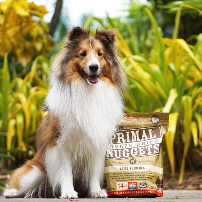 Primal Pet Foods (@PrimalPet) | Twitter