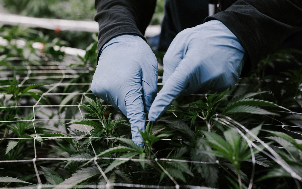 Corporate Interests and Health Coverage Under Review in N&L https://t.co/ll5BH4DxlS #CannabisCommunity #cbd #420 https://t.co/RG7BjF1YrE