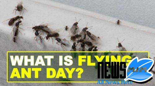 Flying ants hit Huddersfield as temperatures upward thrust in summer weather -- #Flying #a... https://newsmim.com/flying-ants-hit-huddersfield-as-temperatures-upward-thrust-in-summer-weather.html…