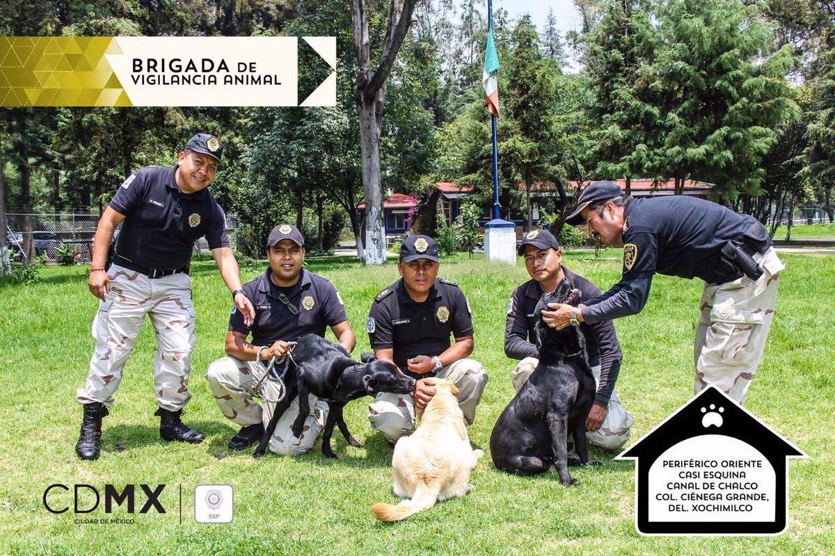 #ValleDeMéxicoHasta tlacuaches cuida la Brigada de Vigilancia Animal de la CDMX | Enfoque Noticiashttps://enfoquenoticias.com.mx/noticias/hasta-tlacuaches-cuida-la-brigada-de-vigilancia-animal-de-la-cdmx…