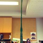 サボテンの成長がおかしい!10日で3cmで伸びて天井に届きそう!