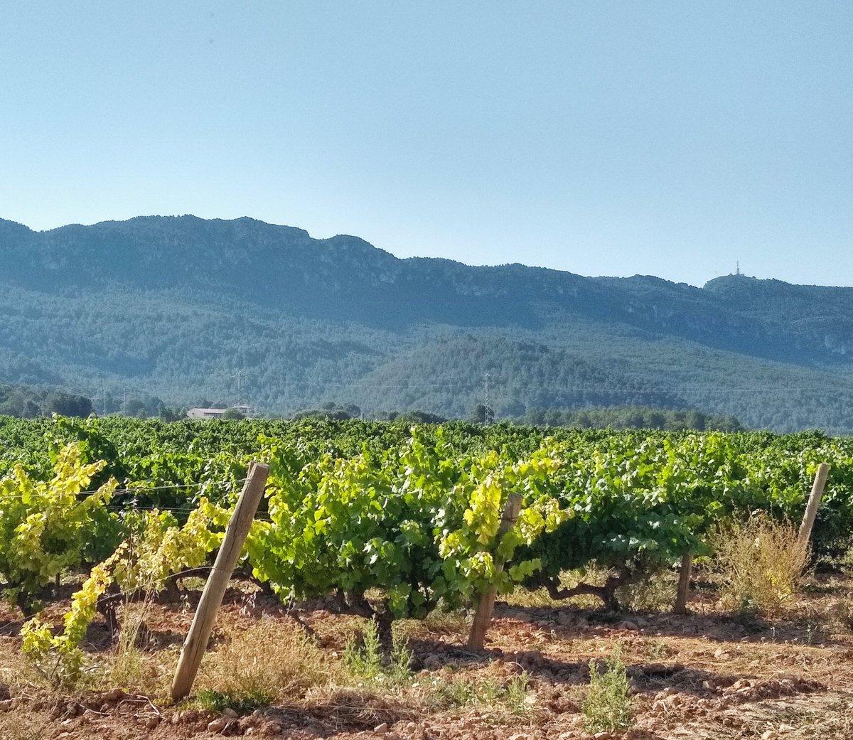 RT @TurMontblanc: Les vinyes ara verdes que dominen el paisatge produiran vins de gran qualitat com els que es poden degustar els #DimecresTapa a #montblancmedieval #VilaAmbCaràcter #AnyTurismeCultural #somgastronomia