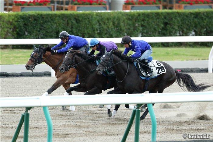 【先輩に続け!】 今朝は準OPのプロフェットと併せたレザネフォール(中)。祖母ファレノプシス、母の叔父キズナ。評判の良血馬は今週28日札幌芝1800mで、三浦皇成騎手を背にデビュー予定。なお昨年この開幕週18新馬を勝ったのは、同厩舎の先輩クラージュゲリエ。 #競馬 #keiba https://t.co/PcJhJvhKBl
