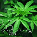 CBD: What it is, how it affects the body and who it might help.  CBD has exploded onto the market, leaving a lot of confused consumers in its wake. Get up to speed with this beginner's guide.  https://t.co/NKtvHkabrT  #CannabisBusiness #cannabis #cbd #thc #cbdusersuk #CBDLife