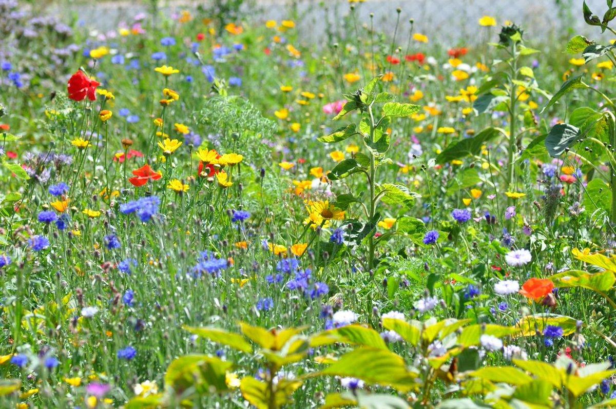 Tag Blumenwiese Na Twitterze