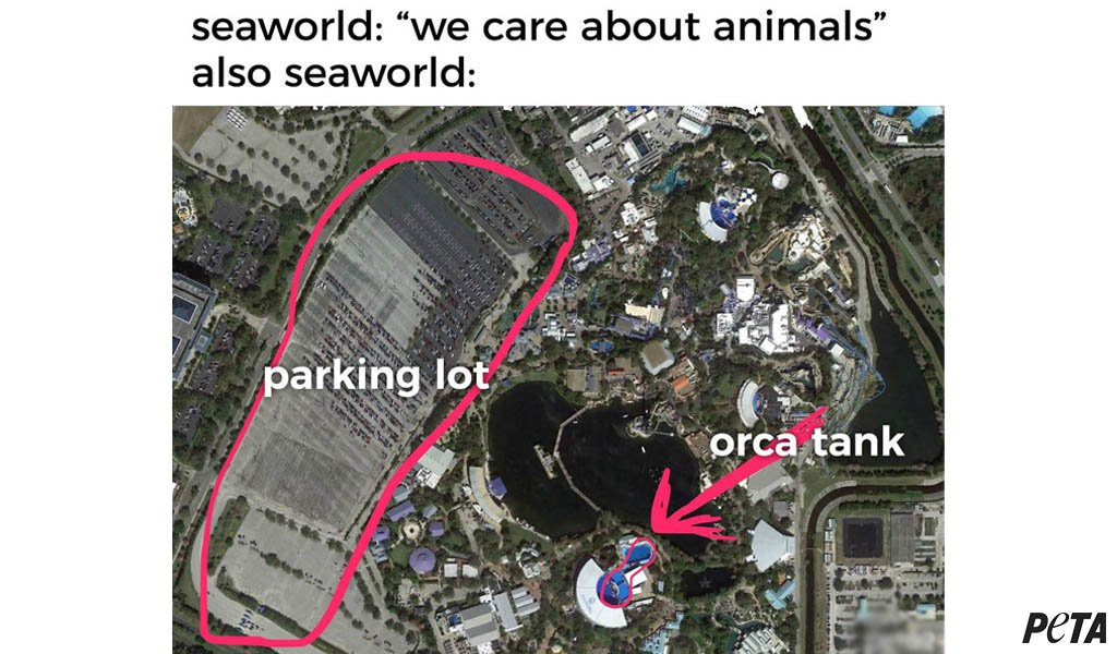 This is all you need to know about #SeaWorld. #BoycottSeaWorldDay