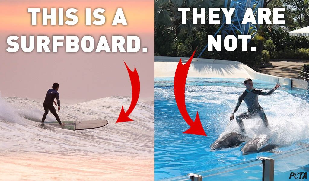 Dolphins are NOT surfboards 🐬🚫🏄‍♀️ #SeaWorld doesn't seem to get that ... #BoycottSeaWorldDay