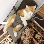 この猫どうやって入ったの確かに赤ちゃん並に可愛いけども