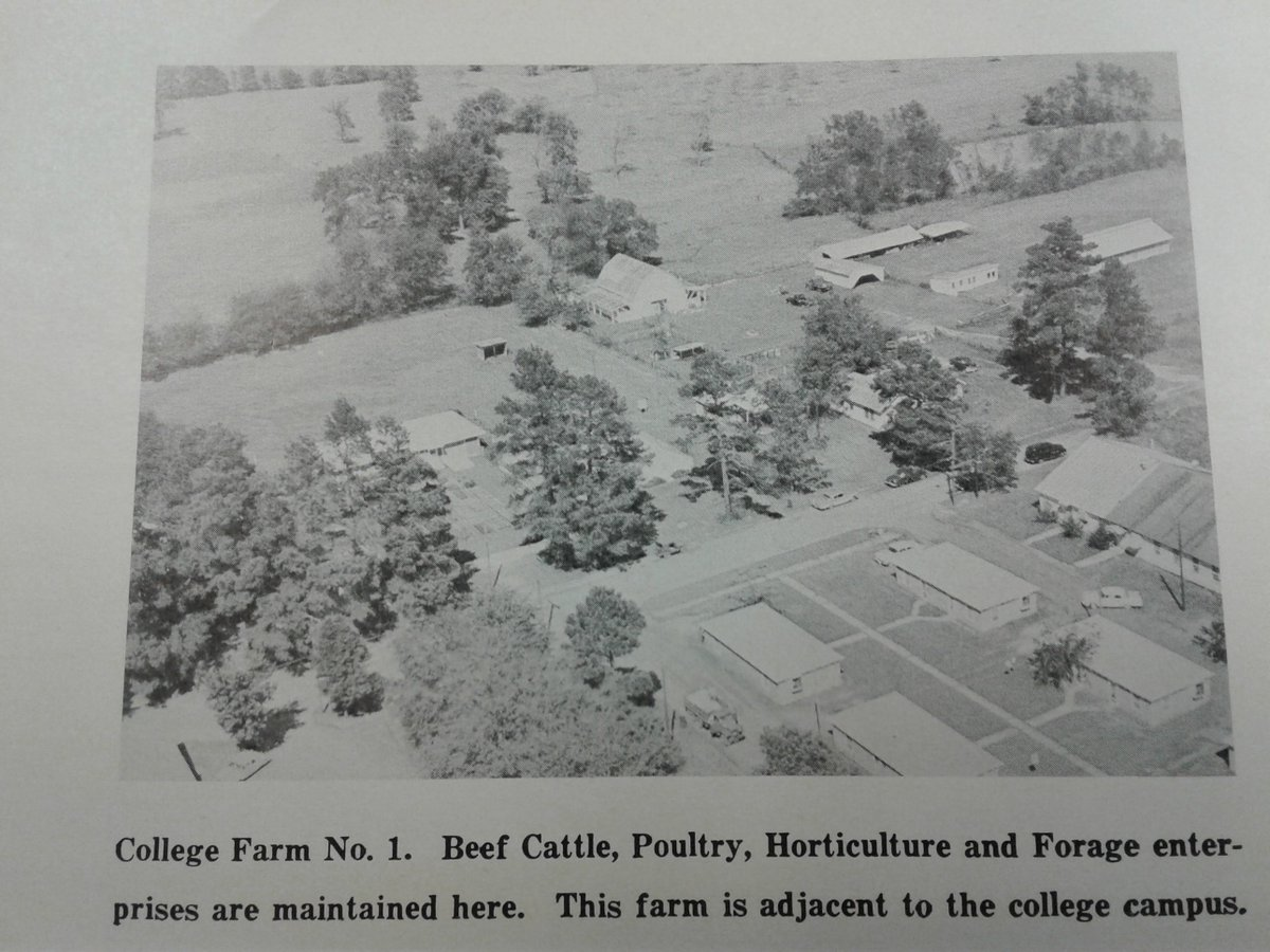 Did you know @SFASU originally had a working farm right here on campus? The area behind what is now the Ag Pond and Homer Bryce Stadium was used to graze cattle and house other livestock! The farm eventually moved to its current location as the campus grew. #throwback https://t.co/OgYIWbA7zB