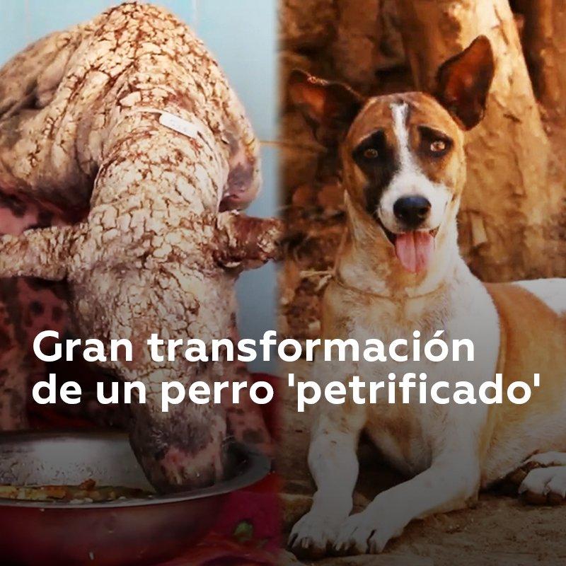 Esta perra sufría una grave enfermedad de la piel causada por los parásitos, cuando voluntarios de Animal Aid la encontraron y le regalaron una nueva vida. ¡Miren como cambió!