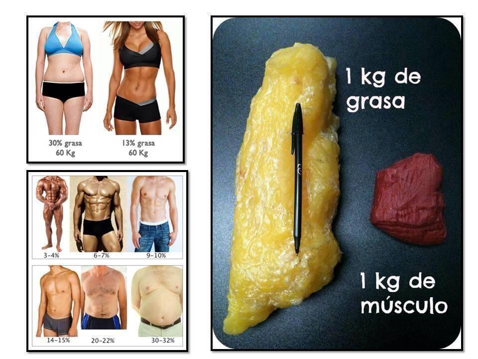 14 de grasa corporal mujer
