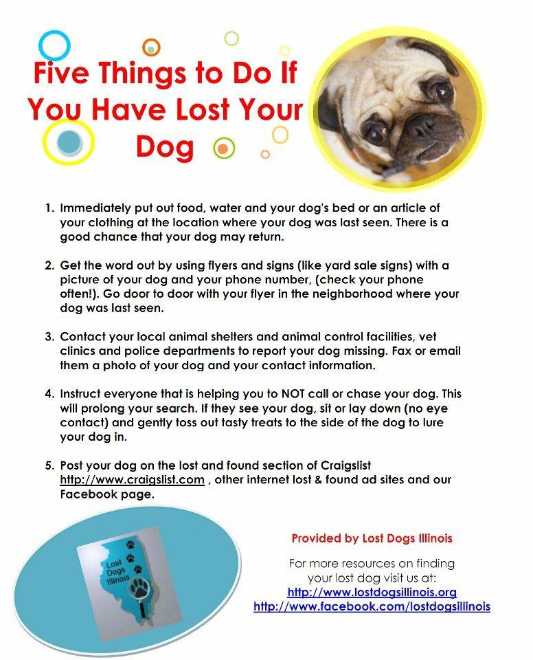 Peoria Il Craigslist Pets