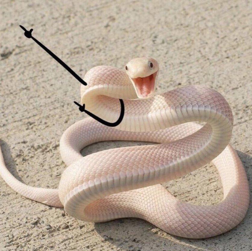 картинка змея с цветком на голове прочитала