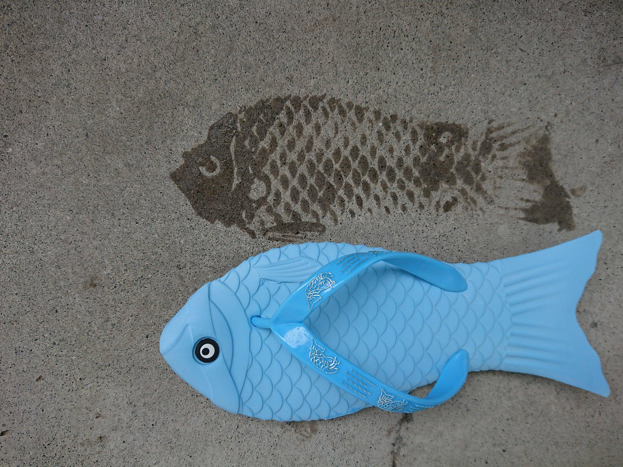 新商品です。 夏と言えばサンダル。 1足でもサンダル。 底を濡らして歩くと魚の跡が…。 ウロコもくっきり。 鳥さんビックリ。 我々は魚拓サンダルと呼んでいます。 正式な商品名は何だろ…(←聞けよ) サンダルなので下駄箱に並べています。 1足(2匹?)1,200円です。
