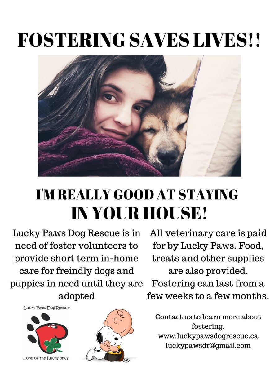 LuckyPaws Dog Rescue (@LuckyPawsDR)   Twitter