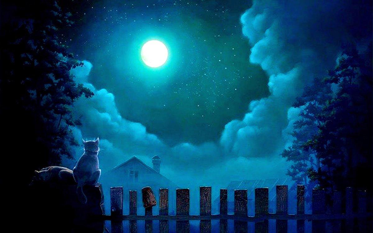 В лунном свете ночи картинки