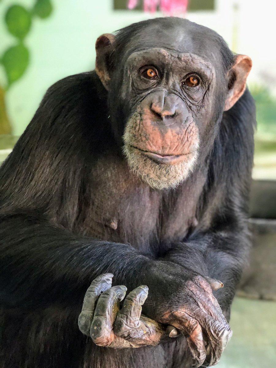 ape hashtag on Twitter