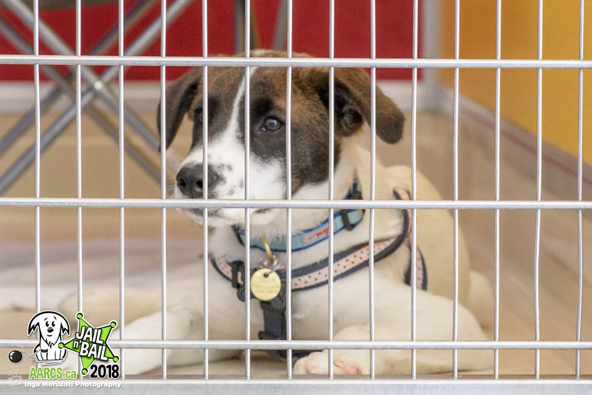 aarcs… tagged Tweets and Download Twitter MP4 Videos | Twitur