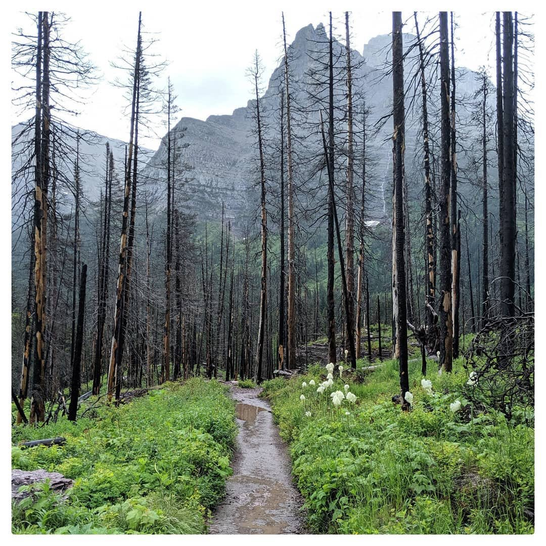 Enjoying the journey is easy in Glacier National Park. On our hike to Virginia Falls we were rewarded with these views along the way. Want to win a national park trip for 2 with Austin Adventures?  https://youtu.be/PUKiIw9HzmQ   #NationalParks  #MotivationMonday  #getoutside  #gnp