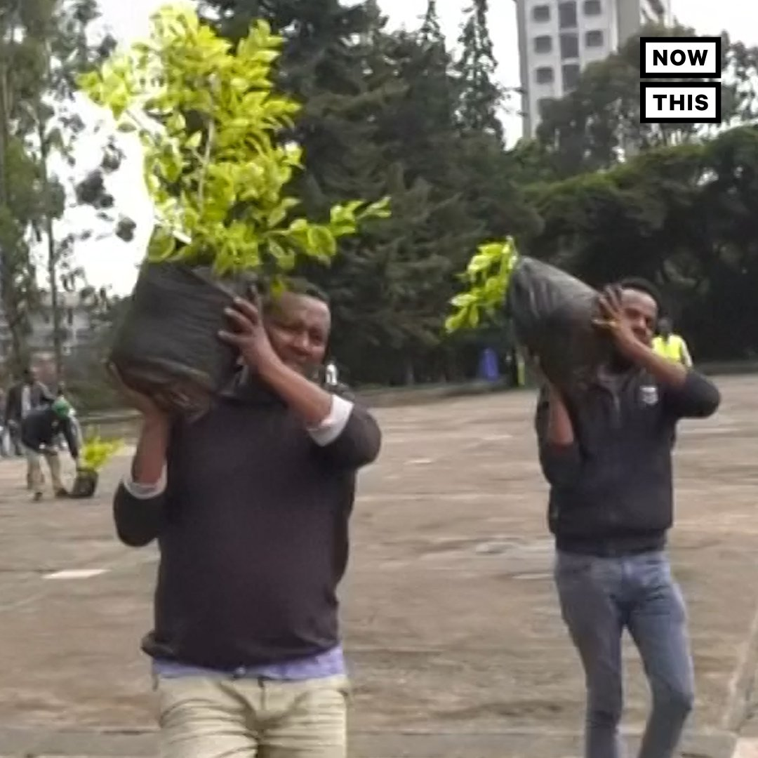 Ethiopia planted a record-breaking 350 million trees in 12 hours to fight climate change