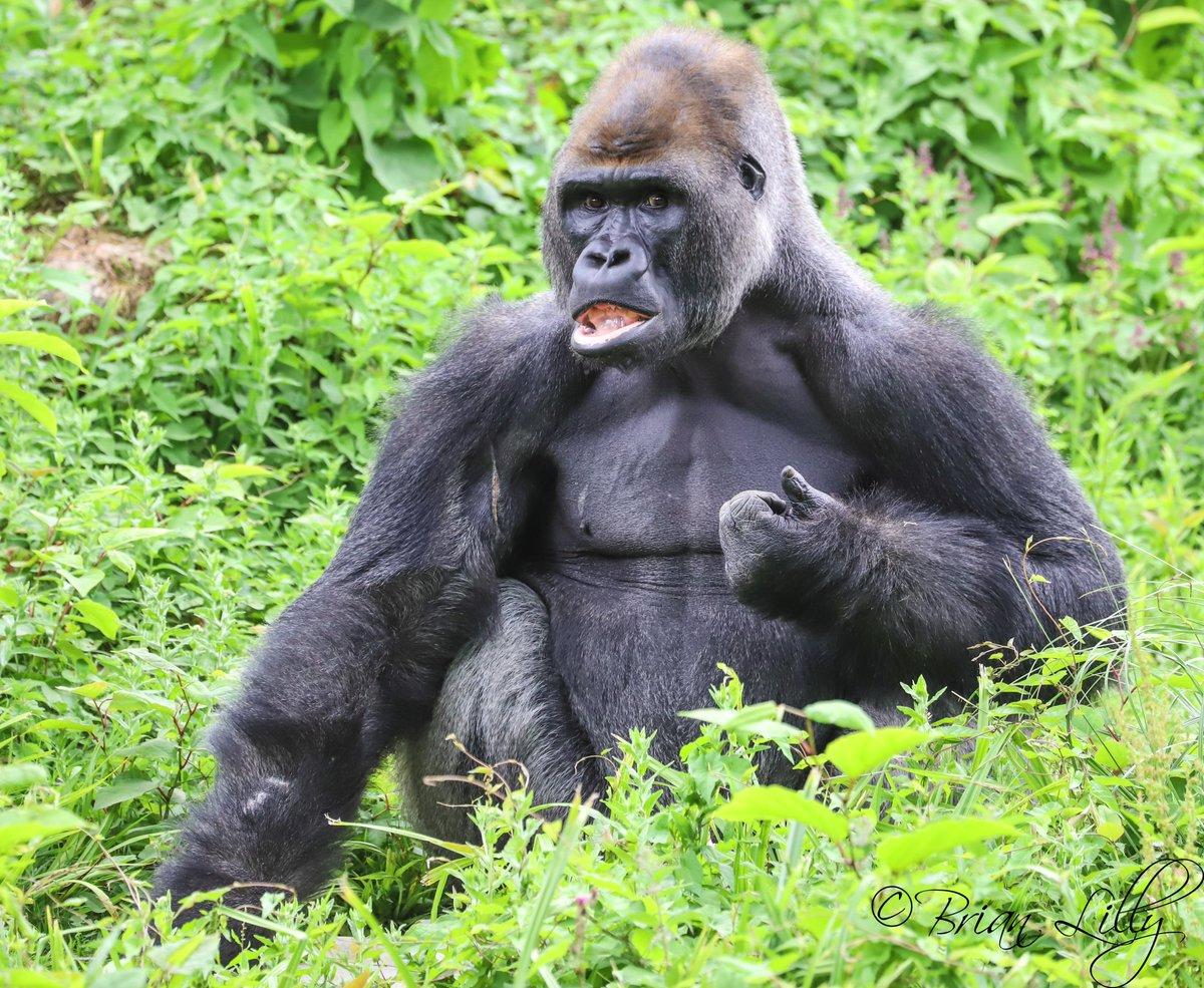 pictures-of-gorillas-having-sex-female-bodybuilder-porn-clit