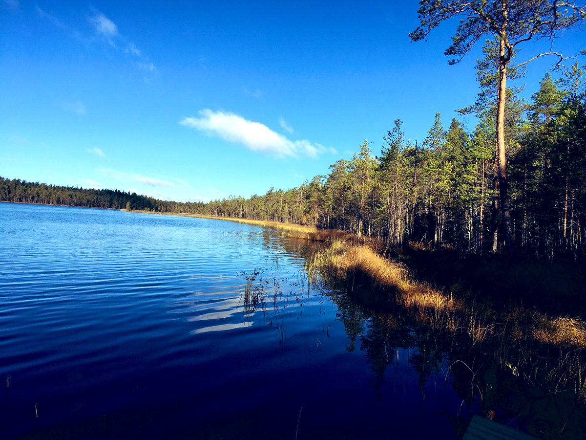 WRC: NESTE Rally Finland [1-4 Agosto] - Página 2 EAufe1vX4AEo7AY
