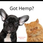Anxiety is a fact of life—even for dogs & cats.   Check out our naturally-pure hemp extract oil for pets at https://t.co/AK0L9fMd4L  #hempforpets #hempoilextract #welcometobetter #passiton #hemp