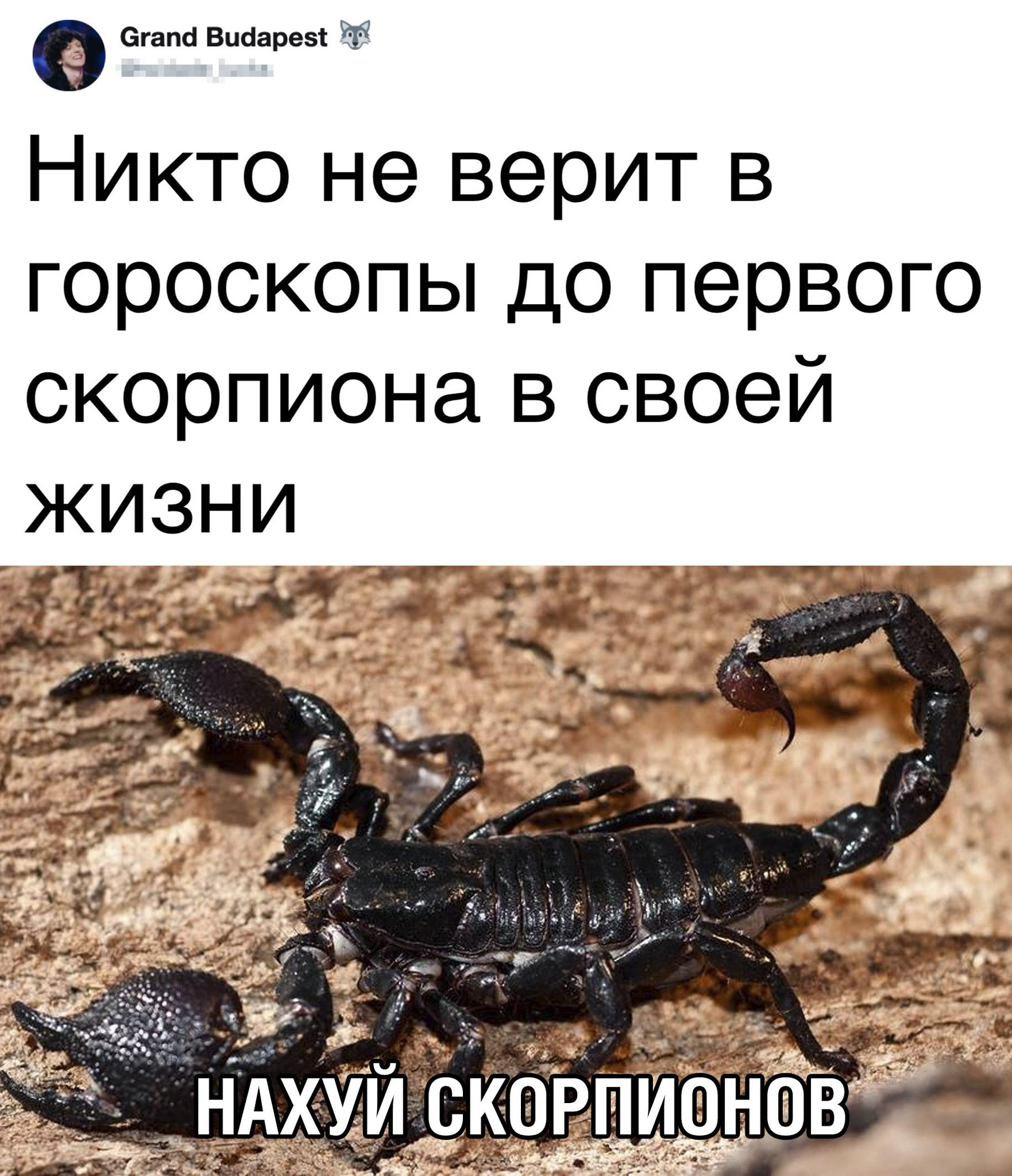 Цитаты о скорпионах в картинках