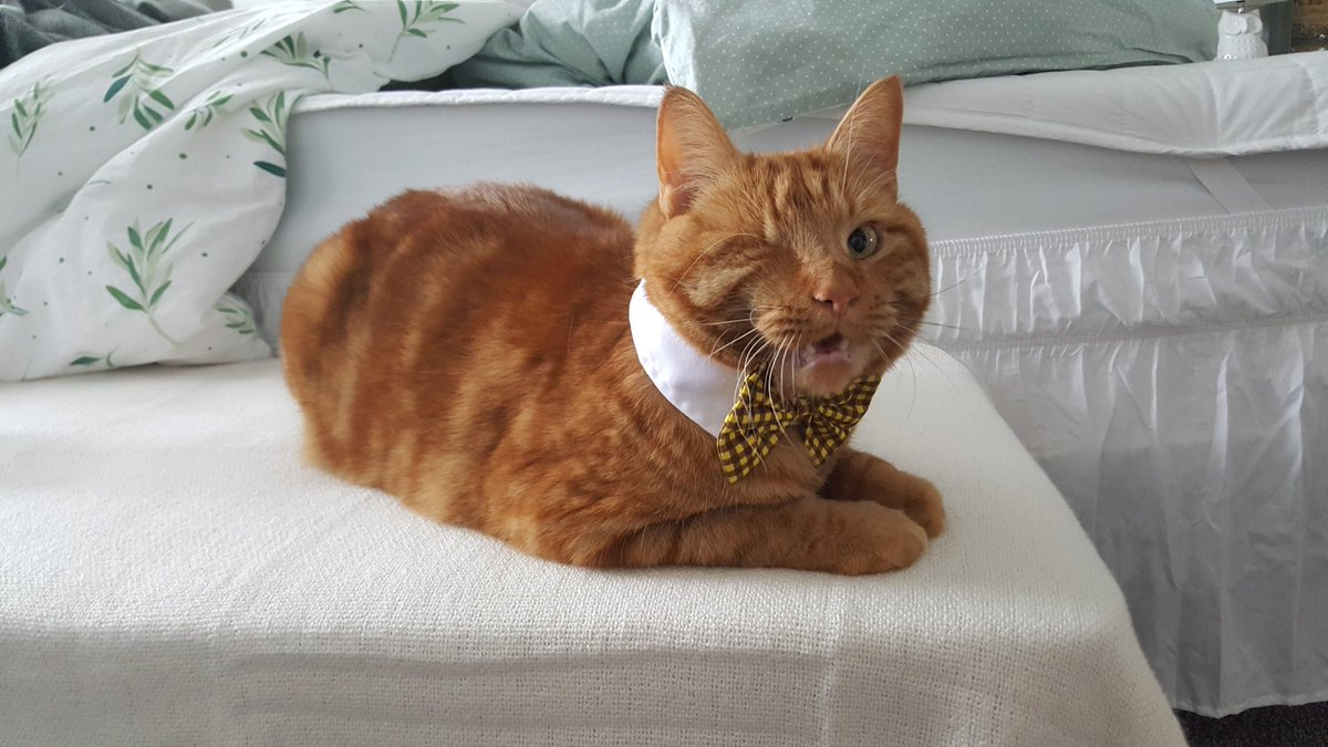 Proton Jon On Twitter Lucahjin Picked Bagel Up A New Collar And Needless To Say He Wasn T A Fan Of It This is a fan mod i made for lucahjin :p a spell and companion can be found in whiterun plz tell me any bugs in the comments! proton jon on twitter lucahjin