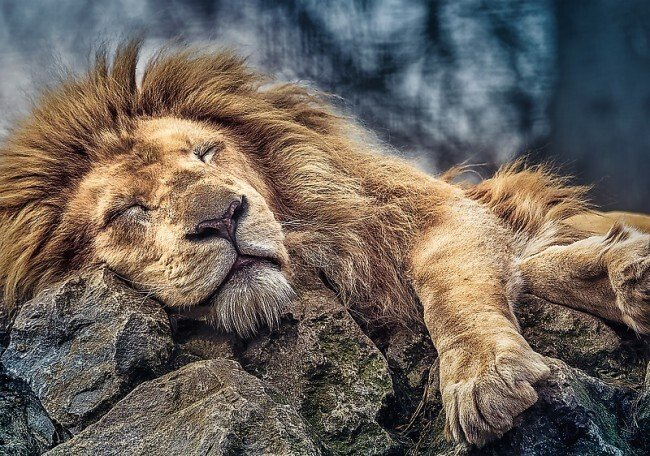 The majority of daily testosterone release occurs during sleep. In fact, theres a direct linear correlation between length of sleep & testosterone levels. If you want to be lean, jacked, energetic, confident and injury free... turn off Fortnite and go to bed