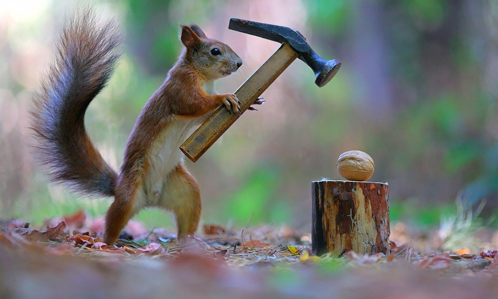 Картинки орешки приколы