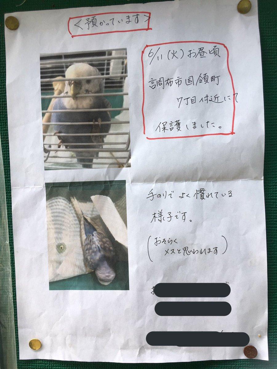 またまた同じ投稿になりますが、保護したインコの飼い主さんが見つかりません。周りの方で探してる方がいるなど、心当たりがある方はご連絡下さい。 #保護インコ #調布国領