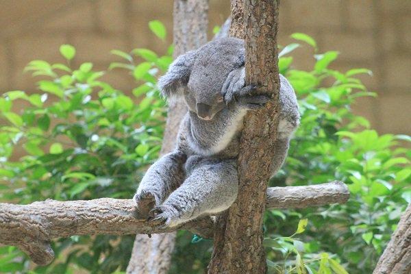 名古屋市東山動植物園さん の人気ツイート , 1 , whotwi