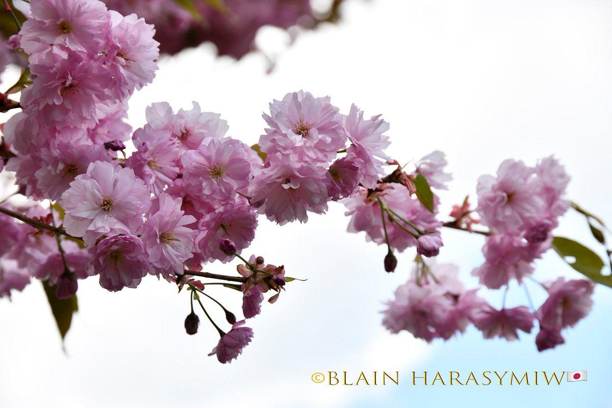 Www blossoms com login php