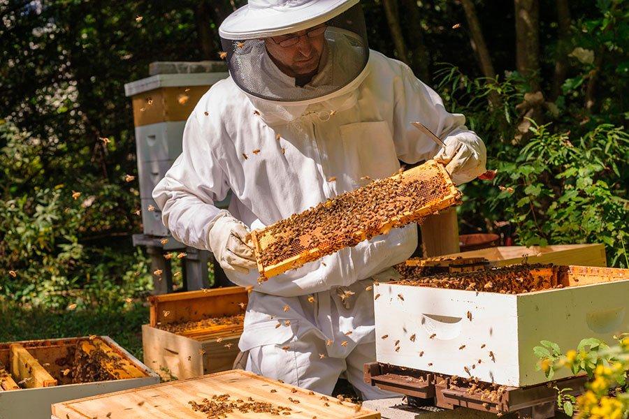 пчеловод улей пчелы картинки год обезьяны торты