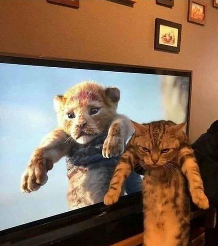 Childhood memories 🤣🤣 #CatsMovie #cats #CatsOfTwitter