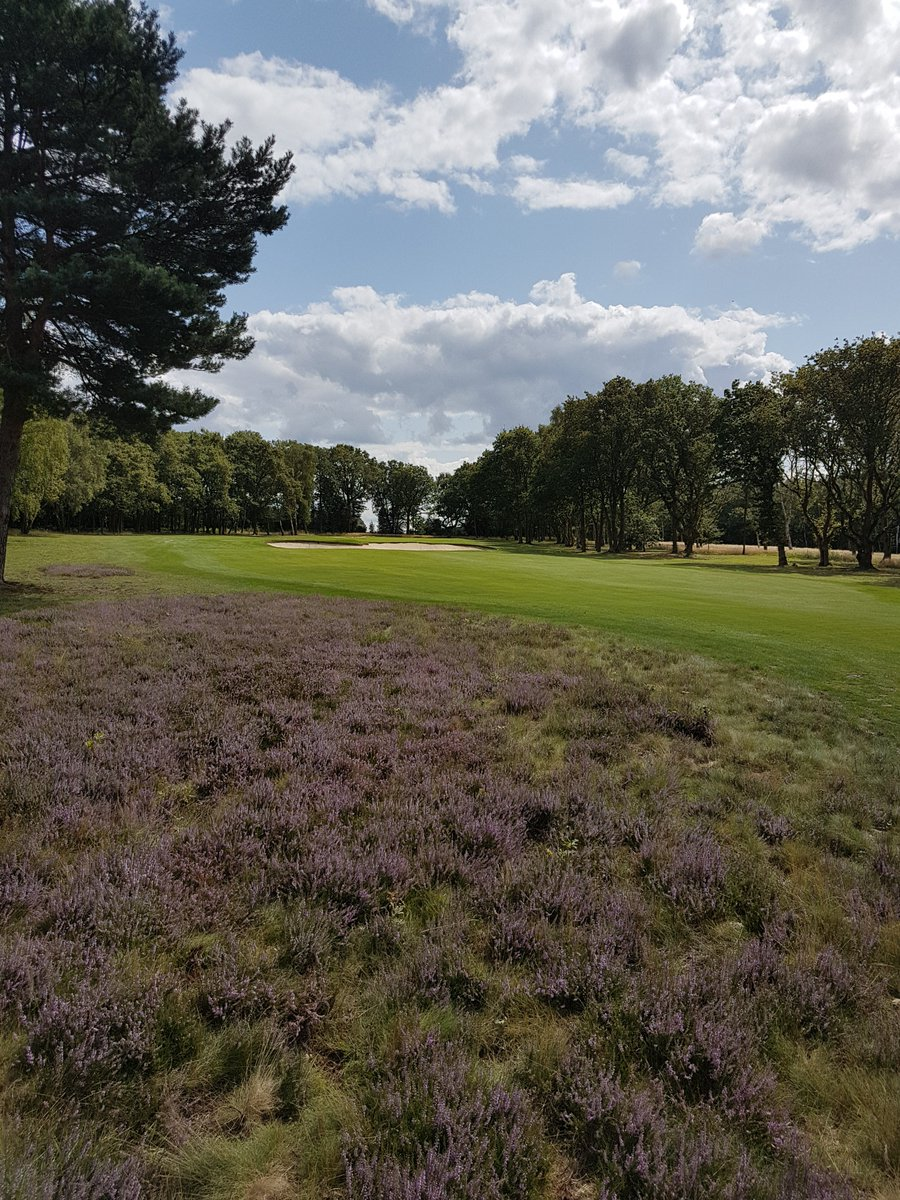 Great to see heather plants starting to flower and add colour to parts of @LittleAstonGolf #golfcourse some of these areas we growed from seed, sown in bare ground and boosted by planting young #heather plants 5 to 10 years ago #WestMidlands #hardworkpaysoff