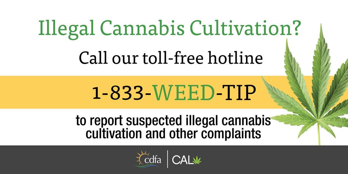 CalCannabis (@cal_cannabis) | Twitter