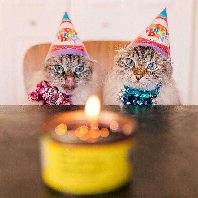 растирается картинки кошачье день рождение отправился путешествие вместе