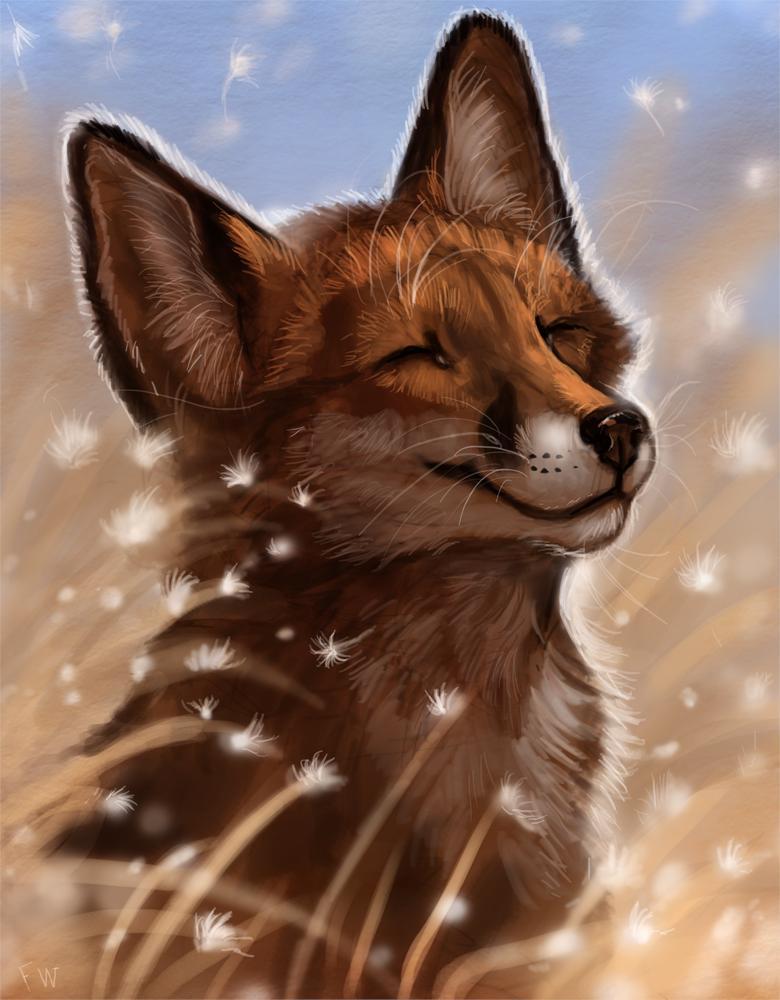 Картинки лисы прикольные на аву