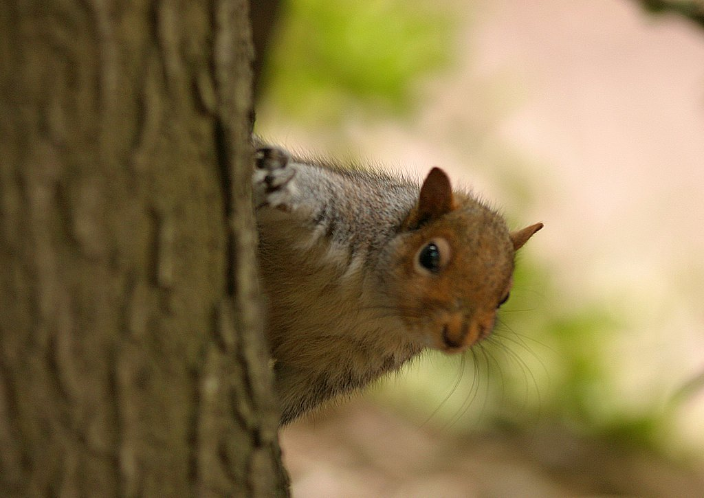 #ThingsSocialMediaHasTaughtMe  Squirrels can't be trusted. <br>http://pic.twitter.com/JZPaZYJ1Mc