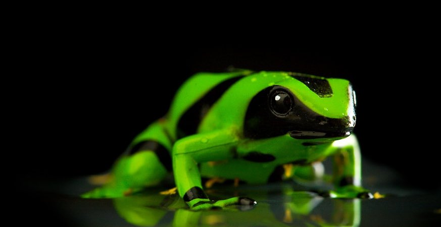 @waterparks i don't have any pets but look at this frog #SUNNYPARX <br>http://pic.twitter.com/Wl5zQ7Rw0N