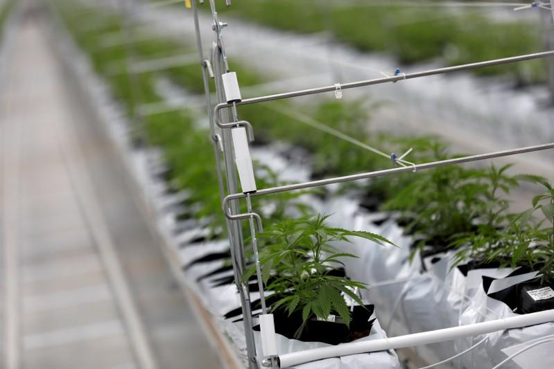 Cannabis firm Tilray posts bigger quarterly loss as investments weigh https://reut.rs/2OSxVxf