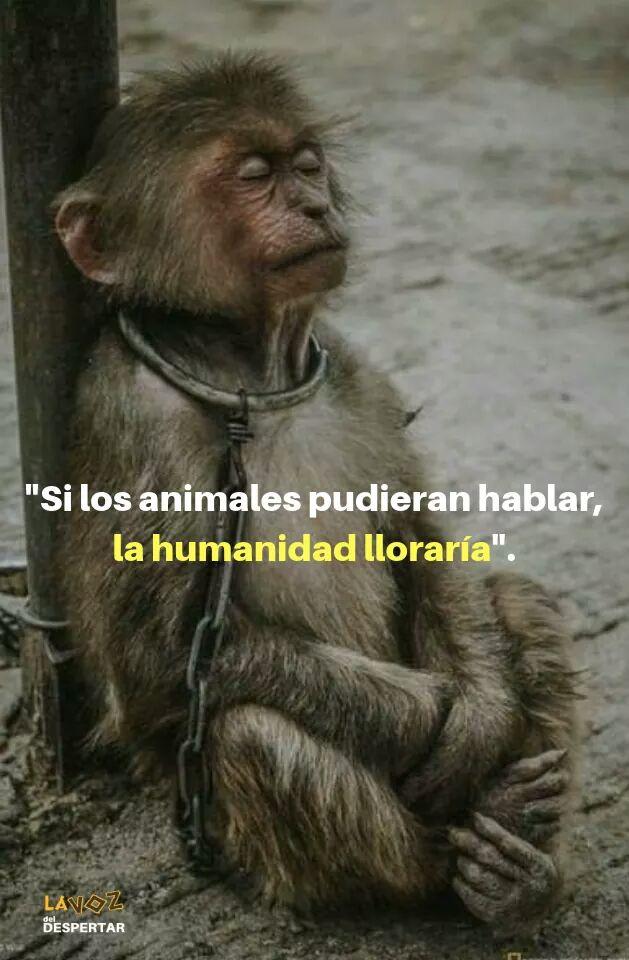 RT @facunda08: 'SI LOS ANIMALES PUDIERAN HABLAR, LA HUMANIDAD LLORARÍA'. https://t.co/wYFKzzm7Xt